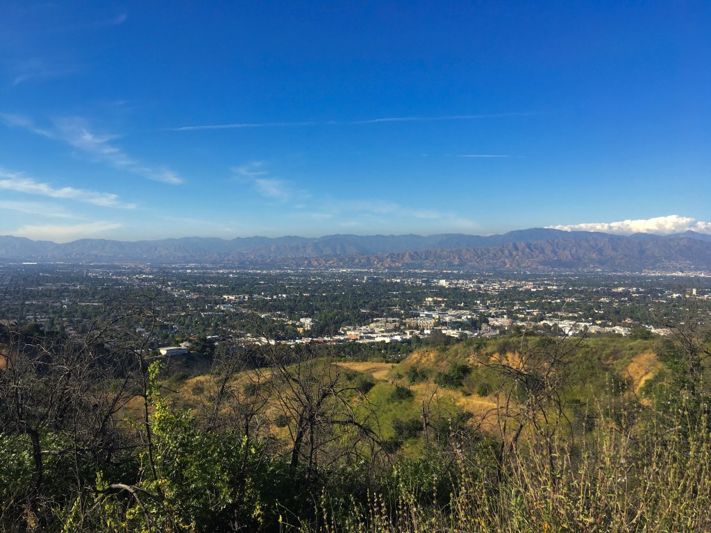 The view from high in Wilacre Park