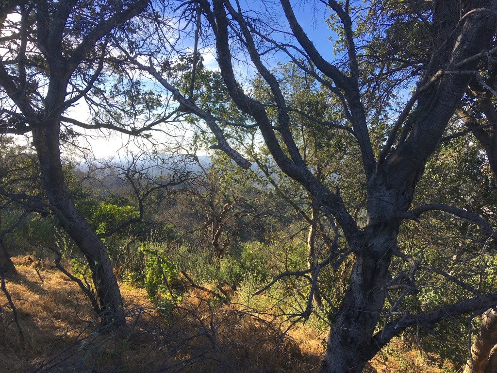 Some of the chaparral, walnut woodland, and coastal sage scrub that makes up much of the L.A. hills