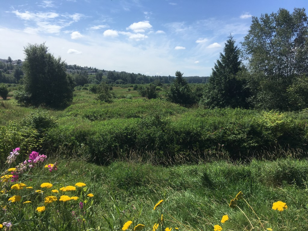 Looking south past wildflowers, over the Coquitlam River, and over the expansive Colony Farm Regional Park