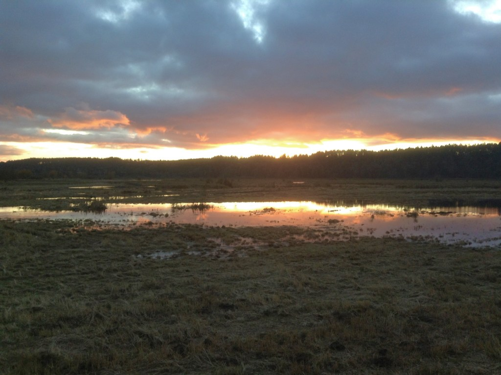 Sunset over the flooded grasslands at Billy Frank Jr. Nisqually NWR