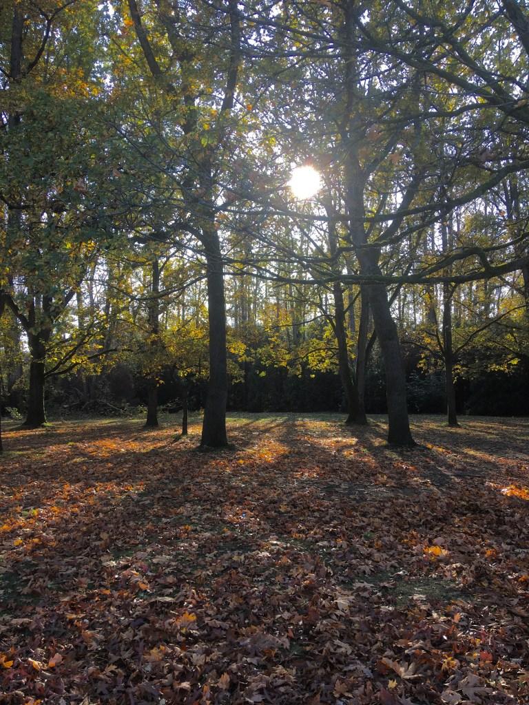 The sun through Jericho Park's trees