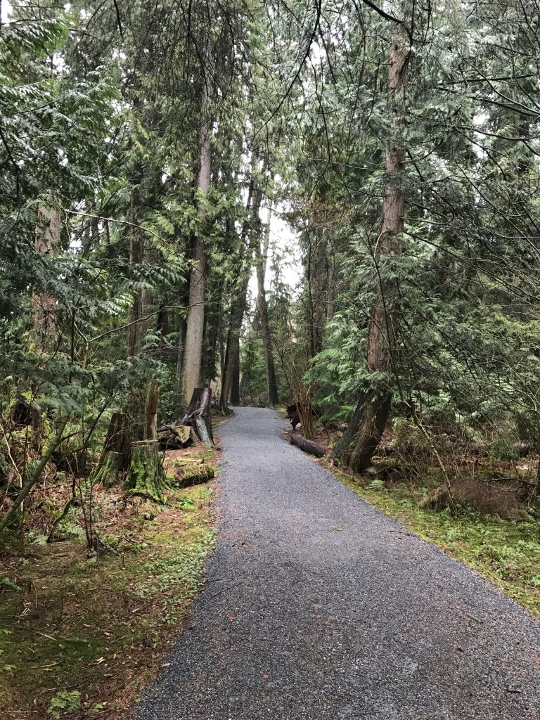 Part of a conifer trail at Burnaby Lake