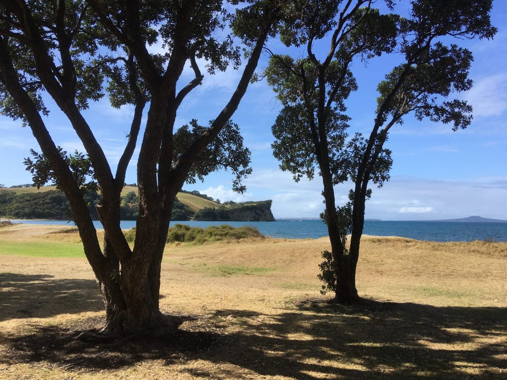 Lawn and beachfront on the south side of Shakespear Regional Park