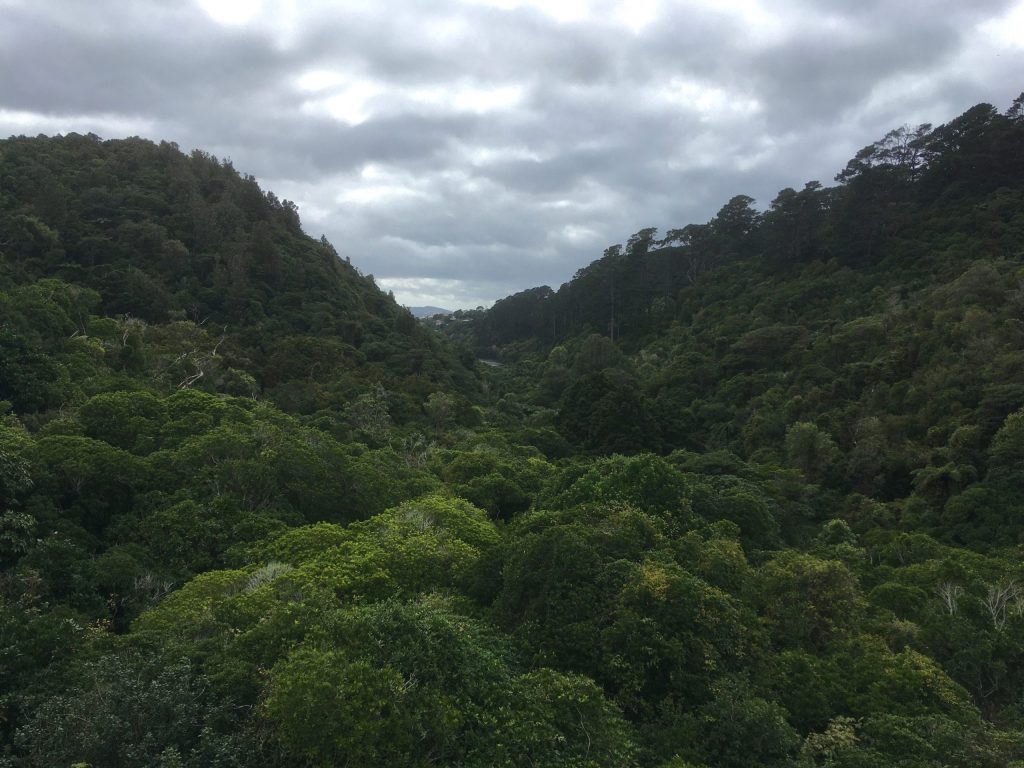 Looking out on the lush green of Zealandia from the dam