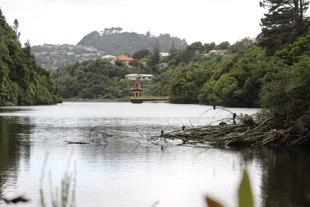 Looking across the lake at the base of Zealandia's valley