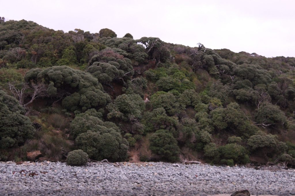 A Yellow-eyed Penguin! It's the tiny white splotch in the middle of the shot. Great photo, eh?