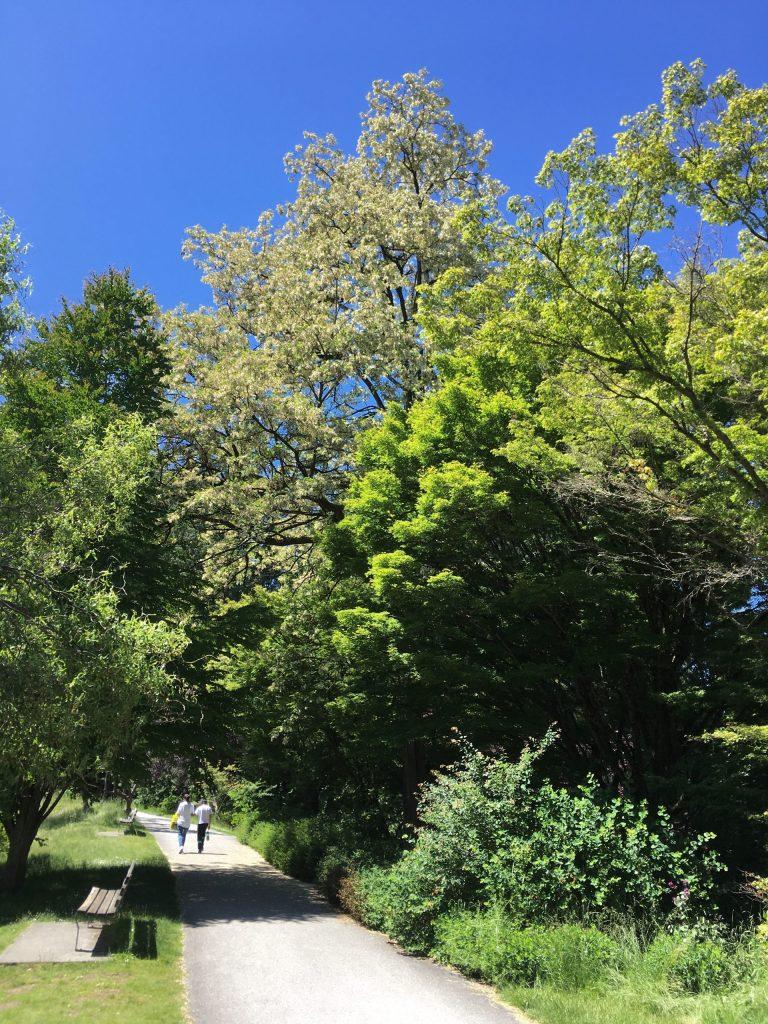 Some of today's Queen Elizabeth Park greenery