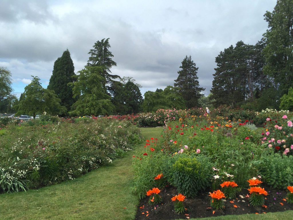 QE Park's rose garden is going strong!