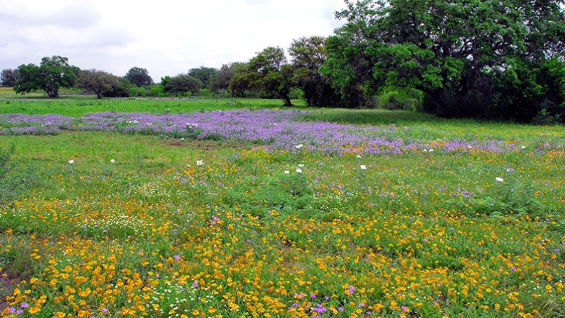 5 Best Places For Scenery In Texas