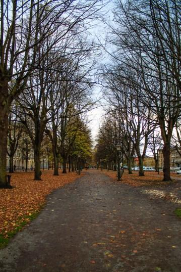 Almost bare trees along Kungsgatan.