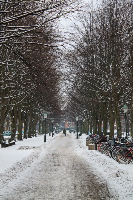 Winter on the boulevard Kungsgatan in Malmö.