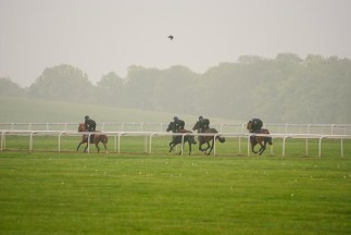 Horses galopping on Warren Hill.