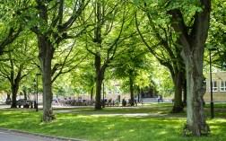 A lunch promenade under shadowy trees on Kungsgatan.