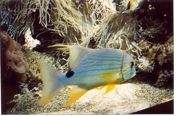 fish-3-50.JPG