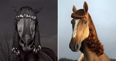horse_with_hair_extensions