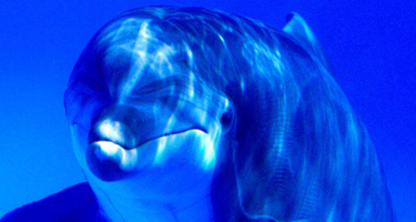 dolphins_are_aliens