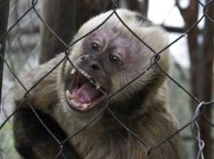 biebers_monkeyD