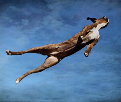 flying_dogsG