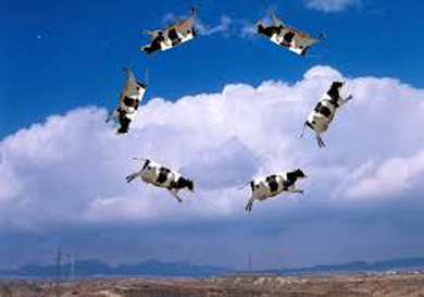 flying_cowsE
