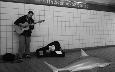 subway_sharks
