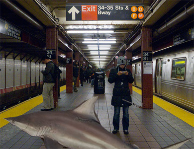 subway_sharksD