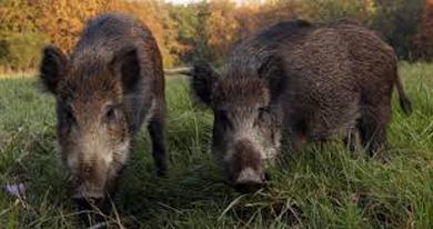 wild_hogs_atlantaC
