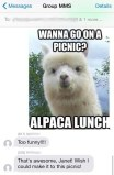Nothing like a good llama meme to bring the group together!