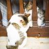 Katzen, Zypern