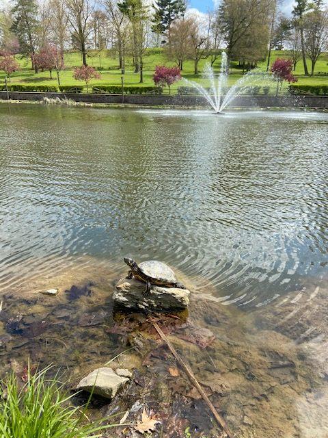 Wheeling Park's Good Lake