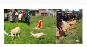 Woman Turns Into A Goat After She Was Forced To Pick The Money She Dropped For School Children (Watch The Video)