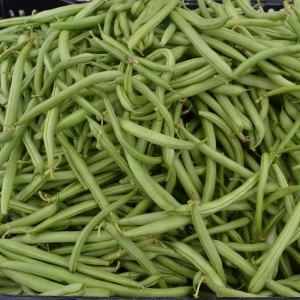 We Grow Beans