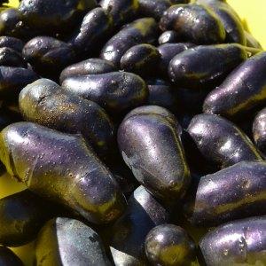 We Grow Purple Potatoes