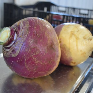 We Grow Rutabaga