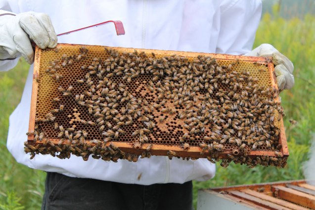Checking on the We Grow Bee Hives