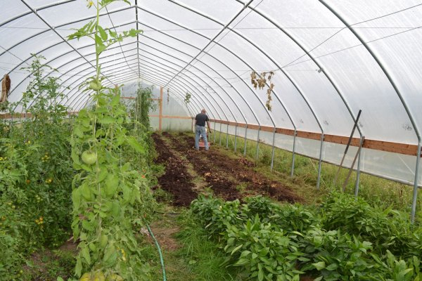 High Tunnel Cleaning at We Grow LLC
