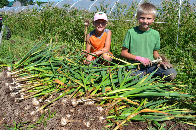 Farmer Gus and Dene helping with the garlic harvest at We Grow LLC