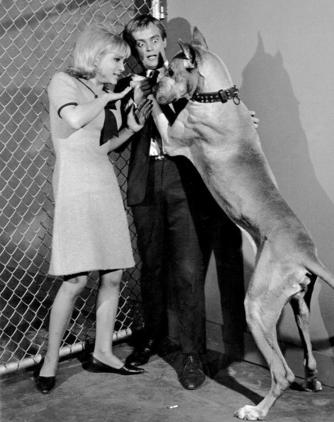 David McCallum looking terrified of a huge dog