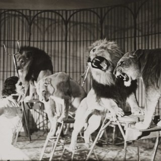 Woah, who'd be a lion tamer eh?