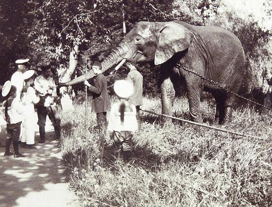 Nicholas II feeds the elephant.