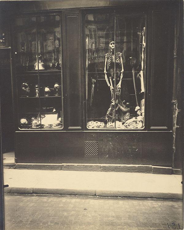Zoologist Shop 1920s Paris
