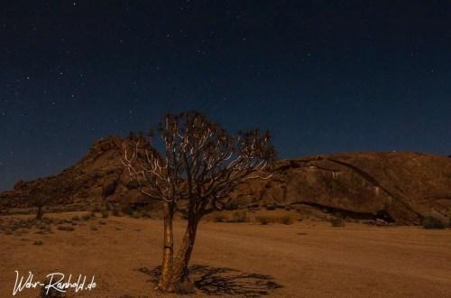 Sternenhimmel über Köcherbaum