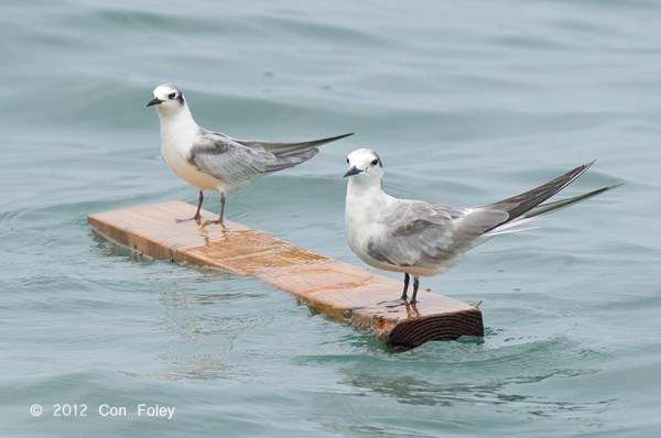 A MAN made that 2-by-4. Do you think these two birds appreciate that for a second?