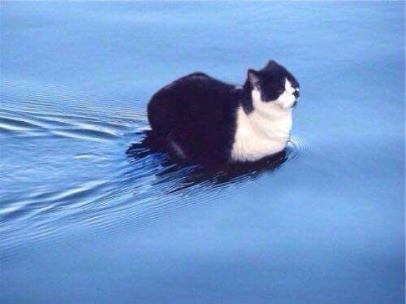 catflywater