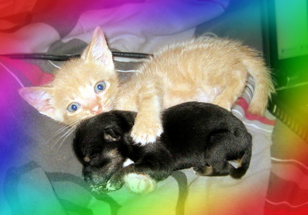 Kitten, puppy, rainbow. (Bonbons not pictured.)
