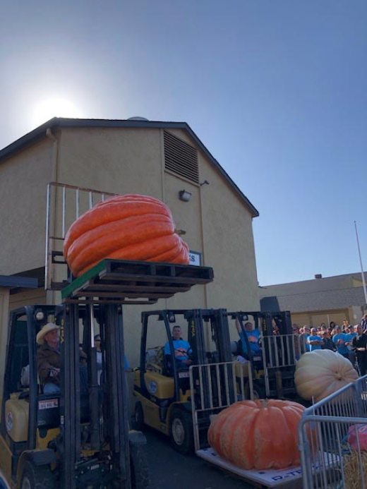 2019 weigh off beautiful pumpkins