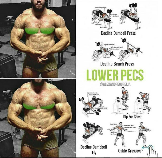 Pectoral Weight Exercises
