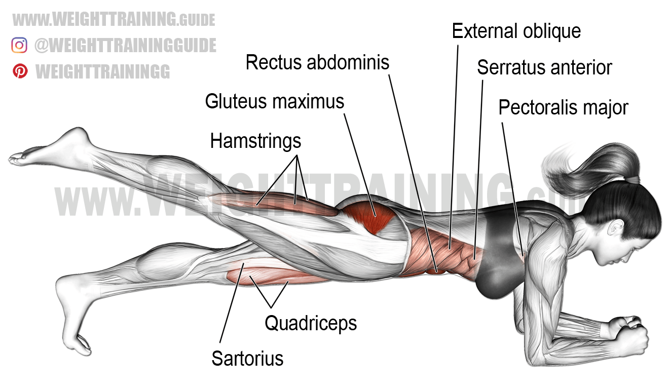Gluteus Maximus Muscle Diagram