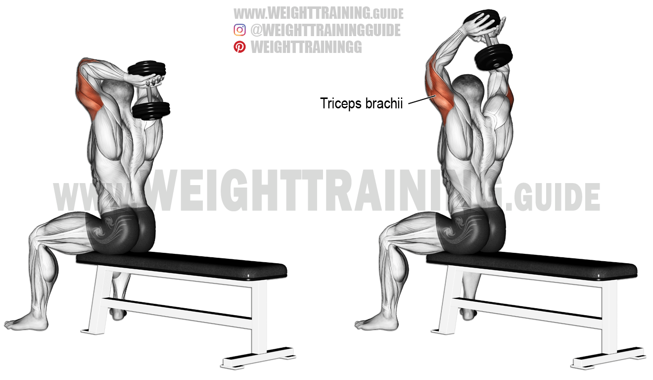 Seated Dumbbell Overhead Triceps Extension Exercise