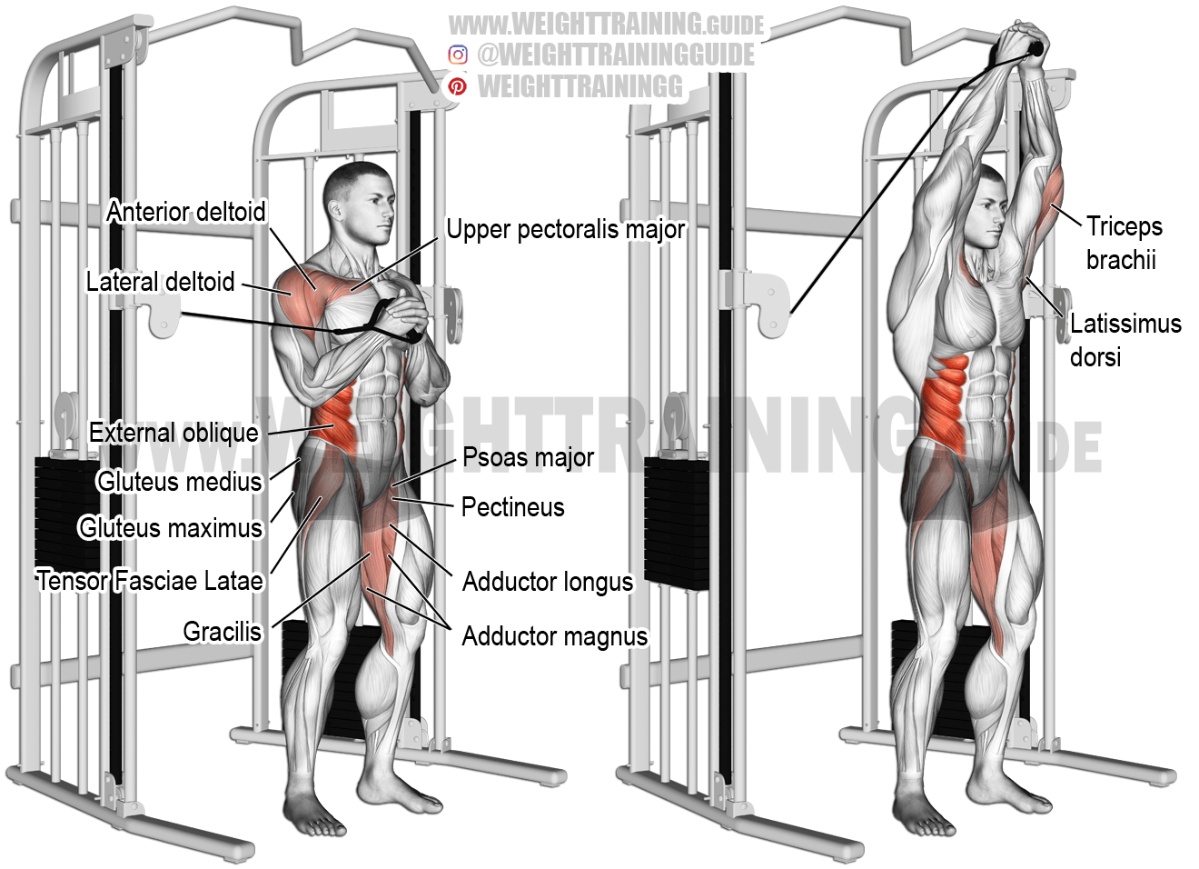 Cable Vertical Pallof Press Exercise Instructions And Video