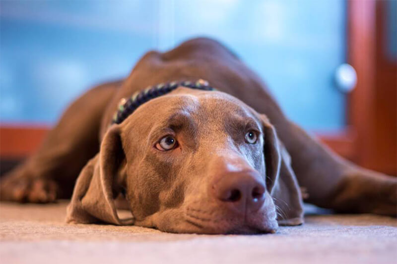 What Are Dogs Scared Of? How to Help Dogs Overcome Their Fears